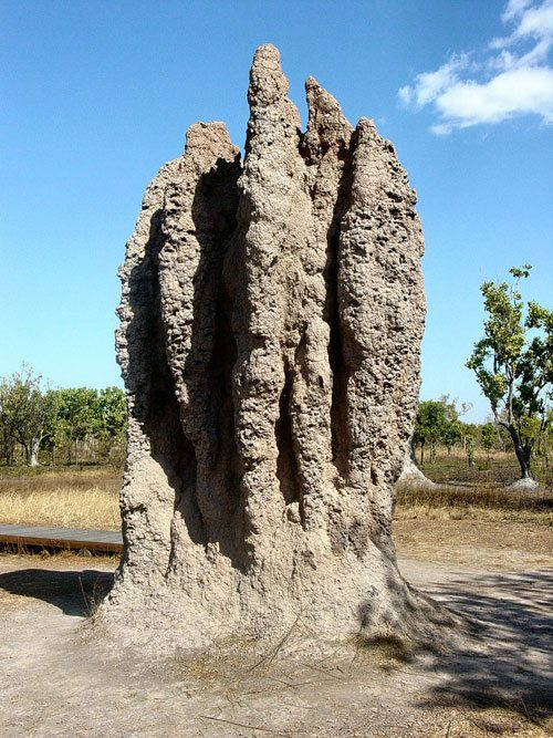 How Do Tiny Termites Build Such Huge Structures? An impressive example of a termite mound.