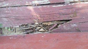 Termite Facts We Bet You Didn't Know! Termite Damage Eaten Steps. Complete Termite Solution.