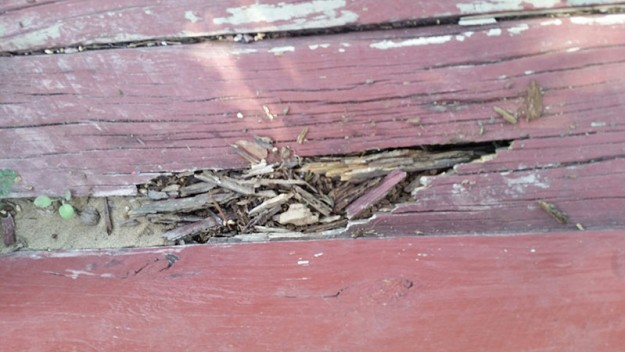 Termite Damage Eaten Steps