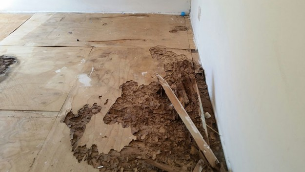 Termite damage eaten floorboards.
